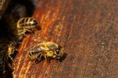 Bee and beehive — Stock Photo