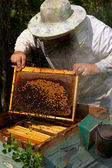 Beekeeper — Stok fotoğraf