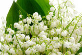 Convallaria majalis — Stock Photo