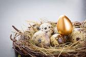 Gold Egg — Stock Photo