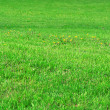 Royalty-Free Stock Photo: Green lawn.