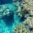 Coral reef — Stock Photo #15436665