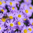 Bee on the flowers. — Stock Photo