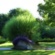 Woman is exercising yoga in the garden - Foto de Stock  