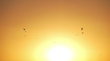 Birds fly in the sunset — Stockvideo