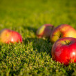 Apples in the grass — Zdjęcie stockowe