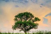 Tree in sky — Stock Photo