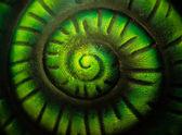 Snail spiral — Stock Photo