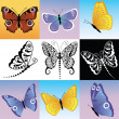 Stock Vector: Different kinds of butterflies.