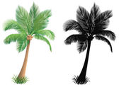 Palm tree and a silhouette of a palm tree. — Stock Vector