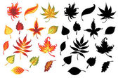 Set of leaves. — Vector de stock