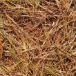 Stock Photo: Dried pine leaves needles