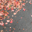 Stock Photo: VirginiCreeper fallen leaves