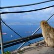 Stock Photo: Monkey sits at precipice and looking at sea