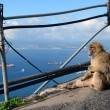 Monkey sits at precipice and looking at sea — стоковое фото #28594217