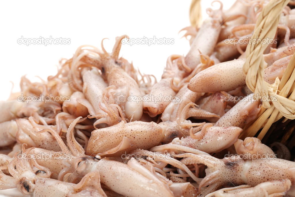 Small Freshly Steamed Squids On White background  — Stock Photo #14136088