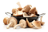 Shiitake mushroom — Stock Photo