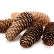 Fir cones taken closeup — Stock Photo