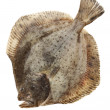 Turbot fish, - Stock Photo