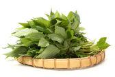 Fresh green mint on white background. — Stock Photo