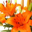 Orange lillies - Stock Photo
