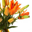 Beautiful lilies - Stock Photo