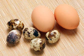 CHICKEN EGG AND QUAIL EGG — Stock Photo