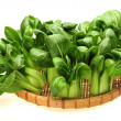 Bok choy - Stock Photo