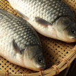 Stock Photo: Two carp