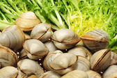 Fresh Clams and Endive , food background , — Stock Photo