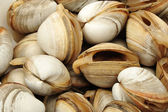 Fresh raw Clams background ,close up.. — Zdjęcie stockowe