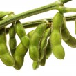 Soy bean — Stock Photo
