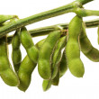 Stock Photo: Soy bean