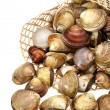 Stock Photo: Clams on white background