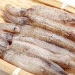 Small Freshly Steamed Squids — Stock Photo