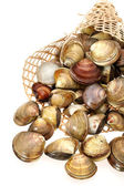 Clams on a white background — Stock Photo