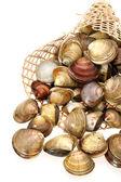Musslor på en vit bakgrund — Stockfoto