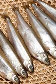 Bankta taze balık — Stok fotoğraf