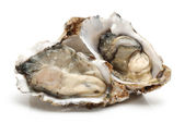 Oyster — Stock Photo