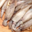 Stock Photo: Freshly caught squid