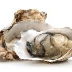 Постер, плакат: Oyster