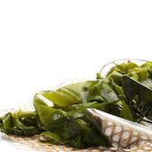 Seaweed — Stock Photo