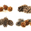 Pine cones — Stock Photo #16878315