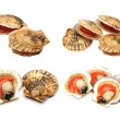 Stock Photo: Scallops