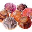 Stock Photo: Live scallops