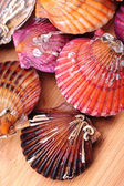 Live scallops — Stock Photo