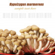 Brown beech mushrooms (Hypsizygus marmoreus). - Stock Photo