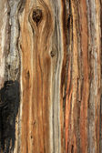 Tree bark texture background — Stockfoto