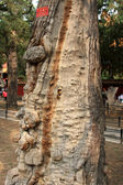 At the Imperial Palace in Beijing tree and building — Stock Photo