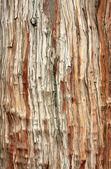 Tree bark texture background — Stock Photo